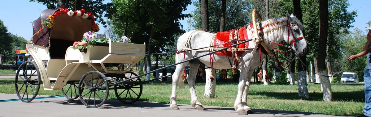 Подарочный сертификат Катание на лошадях Прогулка на бежевом/зеленом экипажеРомантика<br>Прогулка на экипаже подарит вам незабываемые эмоции и позволит максимально расслабиться во время поездки по парковой зоне.<br><br>Номинал: None<br>Тип подарка: Электронный<br>Город (для эмоций): Москва<br>Как воспользоваться?: None<br>Что будет происходить?: None<br>Количество участников: 1 участник<br>Сезонность: None<br>Продолжительность: До 3 часов<br>Где проходит?: None<br>Вид эмоций: None<br>Для кого: None<br>Повод: None