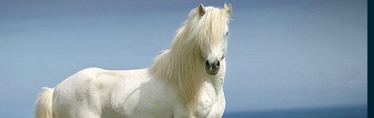 Подарочный сертификат Катание на лошадях Катание на белой  лошадиРомантика<br>Катание на белой лошади - это эффектная прогулка по живописным местам, на которую обратят внимание все.<br><br>Номинал: None<br>Тип подарка: Физический<br>Город (для эмоций): Москва<br>Как воспользоваться?: None<br>Что будет происходить?: None<br>Количество участников: None<br>Сезонность: None<br>Продолжительность: None<br>Где проходит?: None<br>Вид эмоций: None<br>Для кого: None<br>Повод: None